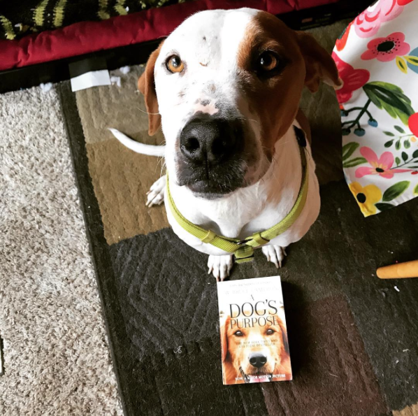 This read is Boba approved